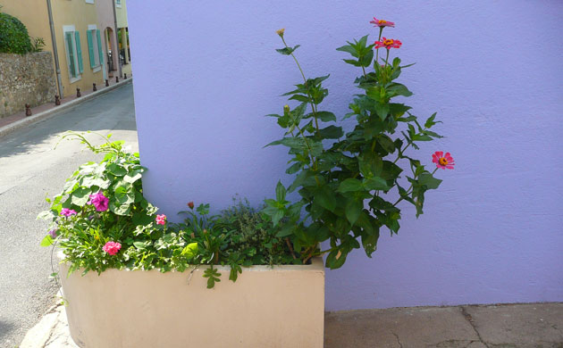 mouans-sartoux-container-garden-plants