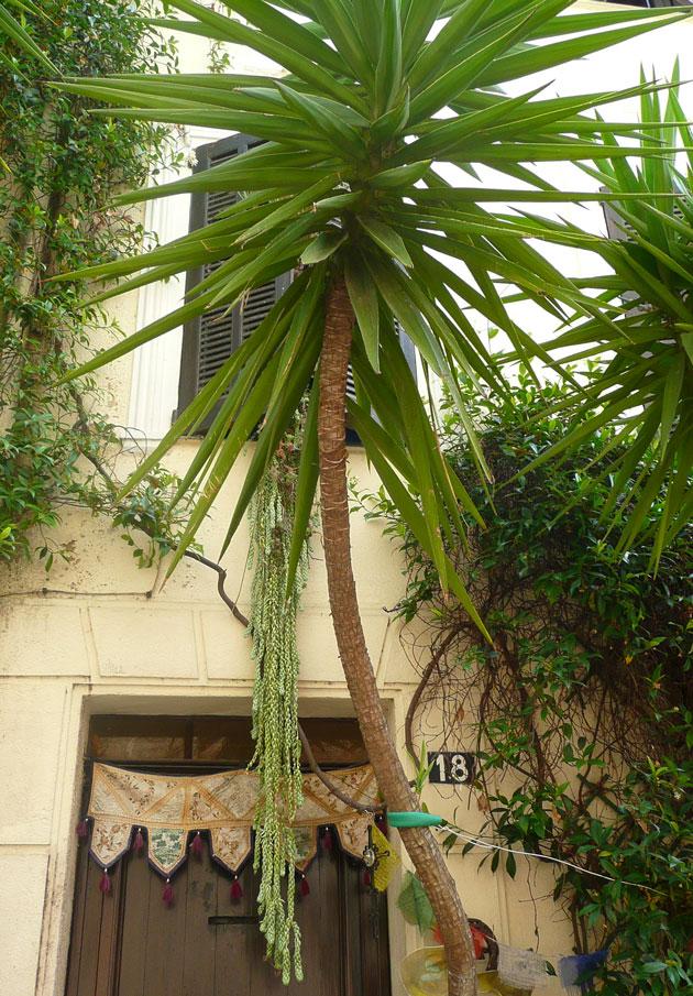 mouans-sartoux-palm
