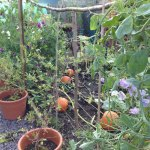 Setting the scene for the autumn garden