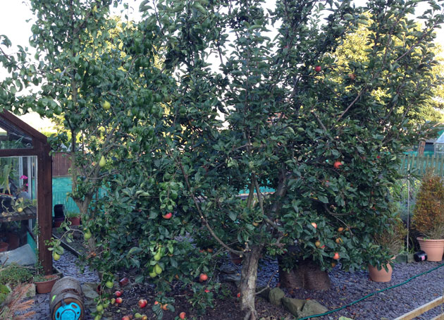 apple-trees-end-of-september