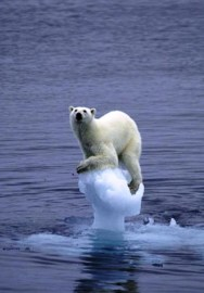polar-bear-global-warming.jpg.644x0_q100_crop-smart[1]