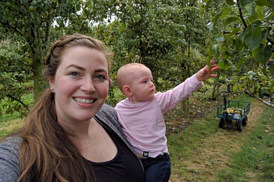 Willow View Farms u-pick apple orchard