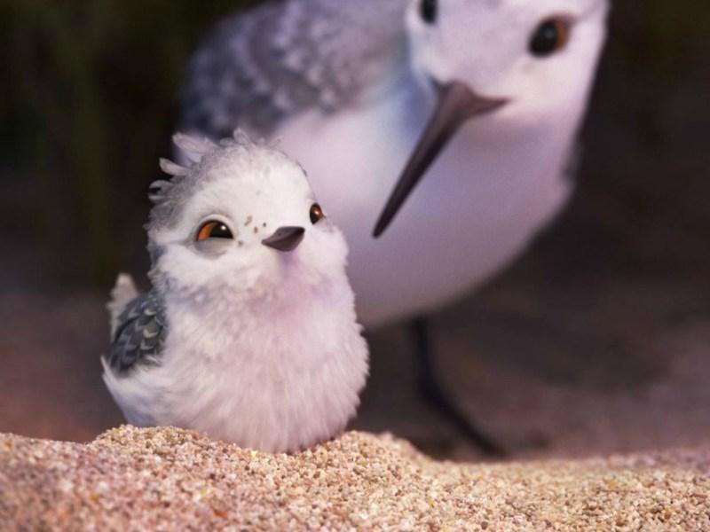 Escena de Piper el cortometraje de Pixar - disneylandiaaldia.com