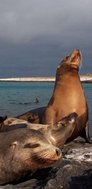 Galapagos05