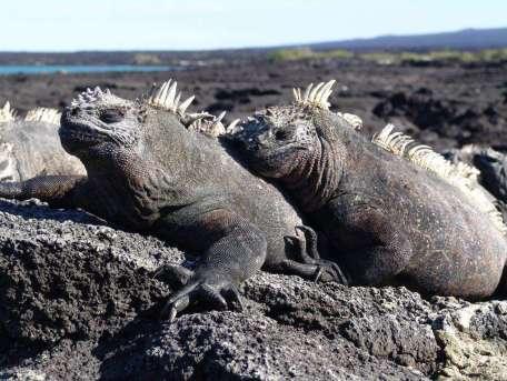 Galapagos18