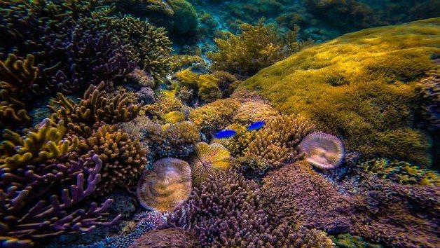 Red Beach Komodo Island Indonesia