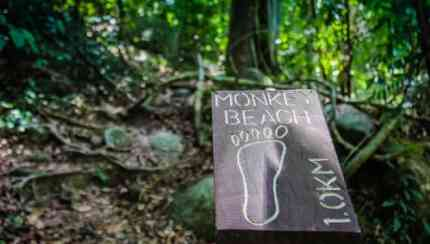 monkey beach essay