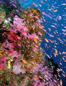 Classic Fiji Reef
