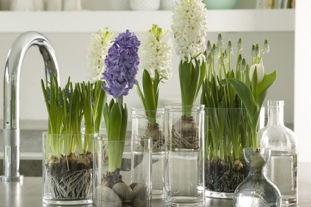 spring decorating ideas home flowering bulbs gl vases hyacinths