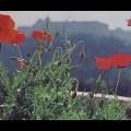Żołnierze spod Monte Cassino