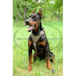 Amusing Dogs Back Problems Dogs Running Harness Studs Managable Dog 6 Harness Big Harness Doberman Lear Decorated bark post Best Harness For Dogs