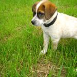 Lowchen — Facts You Must Know Before Adopting Lowchen