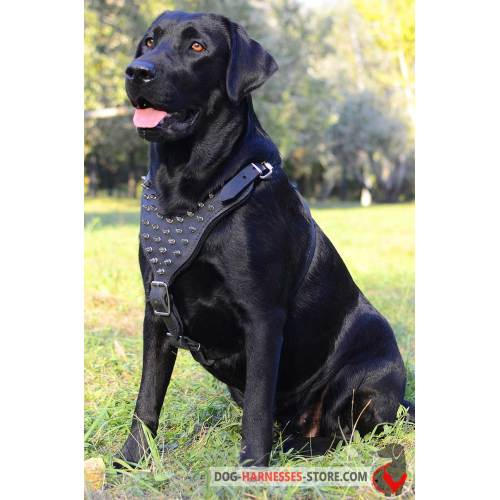 Medium Crop Of Best Harness For Dogs