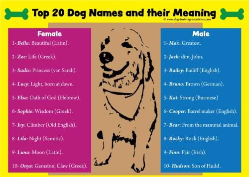 Medium Of Latin For Dog