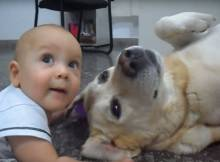 old lab with tiny baby