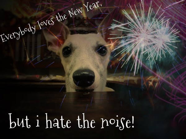 TOP 10 New Year's Eve Dog Safety Tips