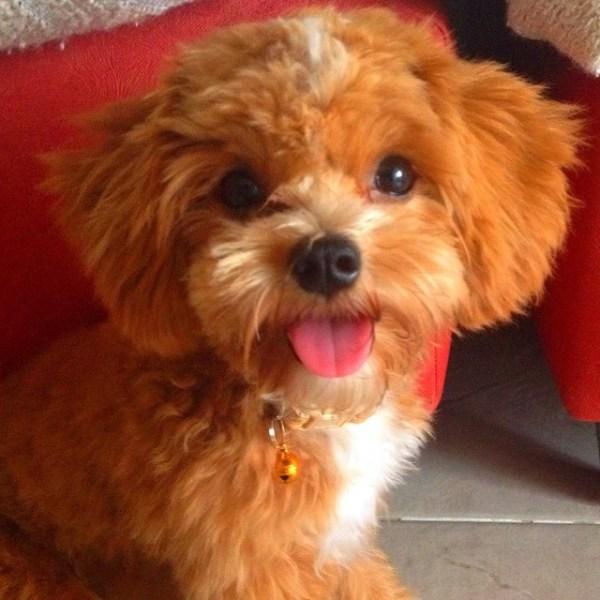 Dog Actor Profile: Cappucino