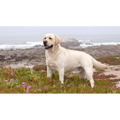 Medium Crop Of Big White Dog Breeds