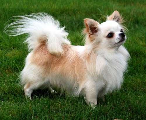 Medium Of Most Affectionate Dog Breeds
