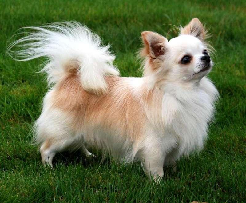 Large Of Most Affectionate Dog Breeds