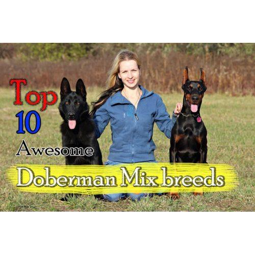 Medium Crop Of Are German Shepherds Good With Kids