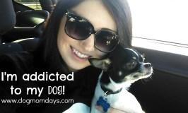 I'm Addicted to my Dog
