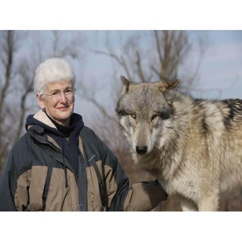 Medium Crop Of Wolf Vs Dog