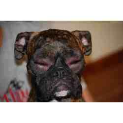 Small Crop Of Dog Itching Benadryl