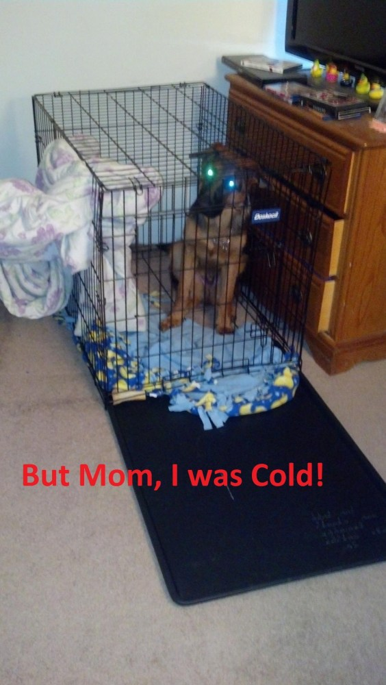 But Mom I Was Cold