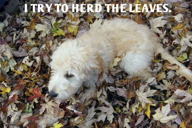 I Try To Herd The Leaves Its My First Autumn