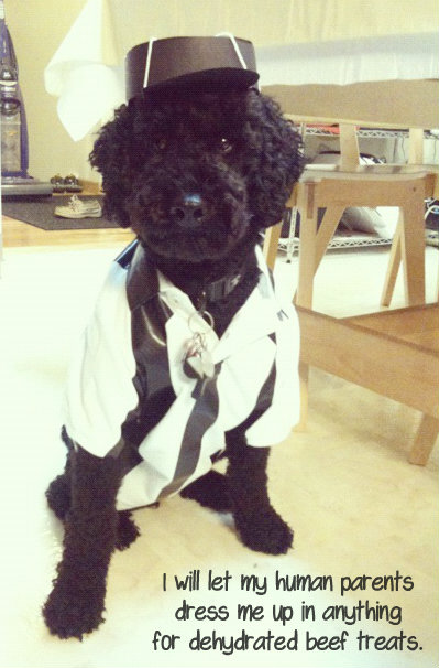 Our Poodle Dressed Up As A Replacement Ref For A