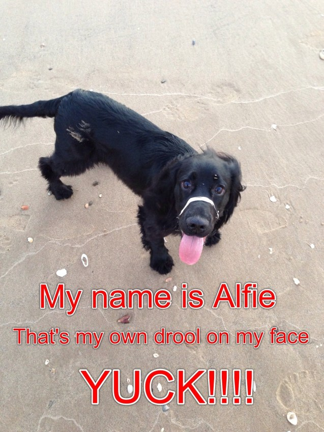 My Name Is Alfie Thats My Own Drool On My Face