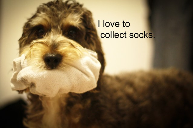 Socks Especially Dirty Ones And My Dog Taro Is