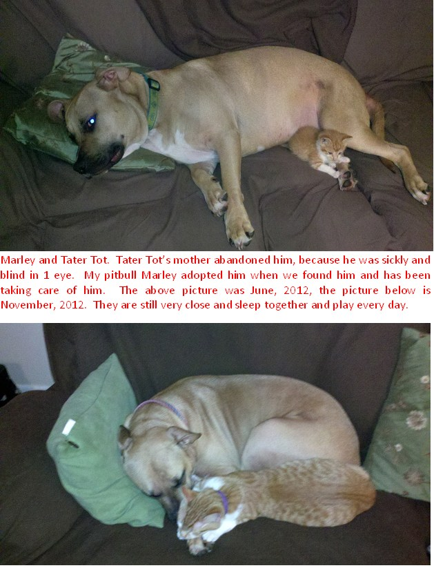 Marley-and-Tater-Tot-Before-and-After