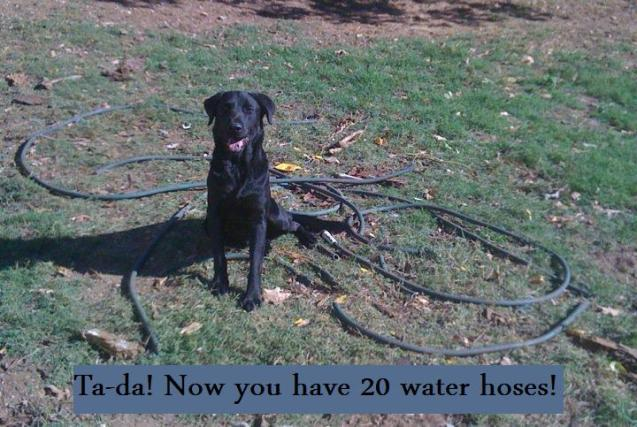 Zig-VS-water-hose
