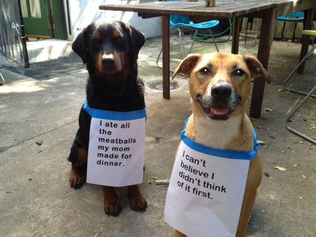 dog-shaming-dee-and-orson