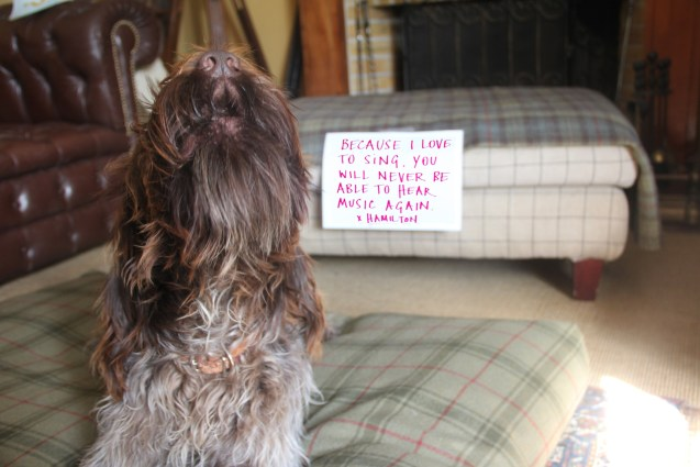 dogshaming16