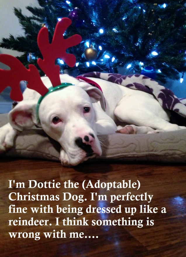 Dottie-shaming