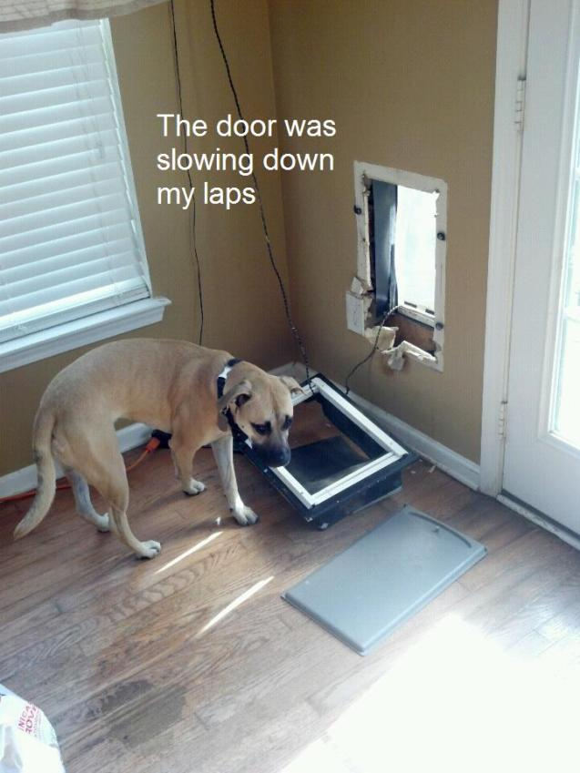 Lexi-dog-door