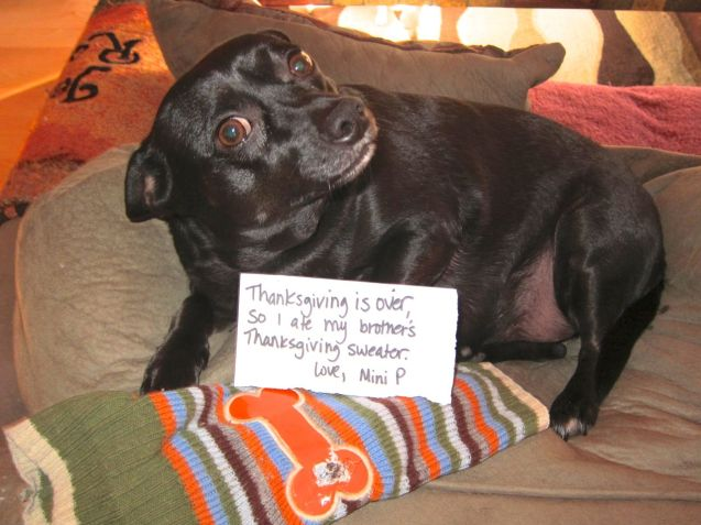 Mini-P-Dog-Shaming-2012
