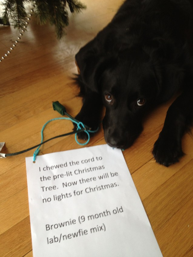 dog-shame