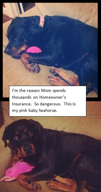 dog-shaming4