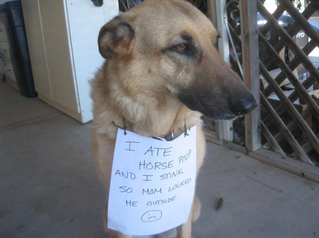 Dog Anxiety Eating Poop