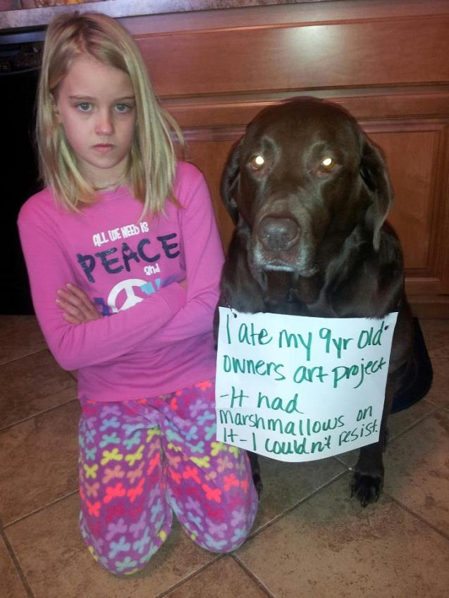 Dog-Shaming2