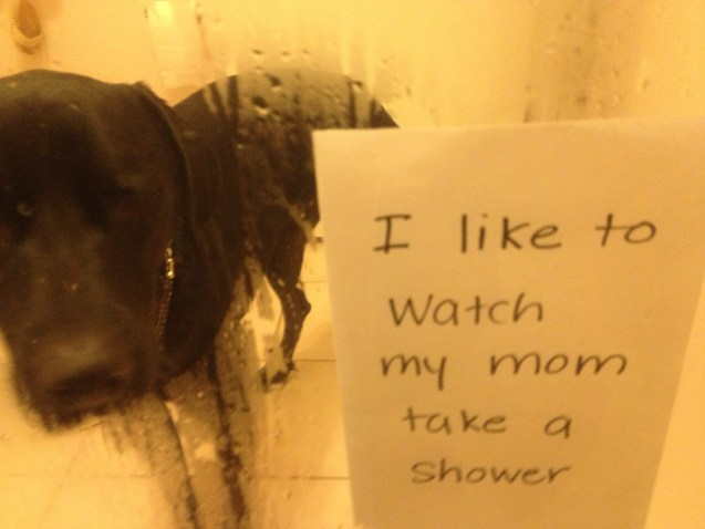 dogshaming3