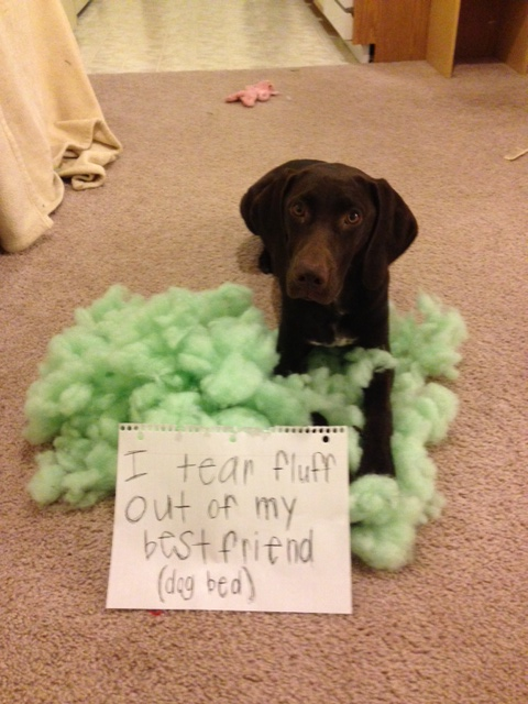dogshaming4