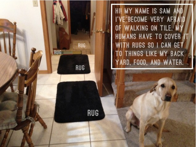 Sam_Dogshaming