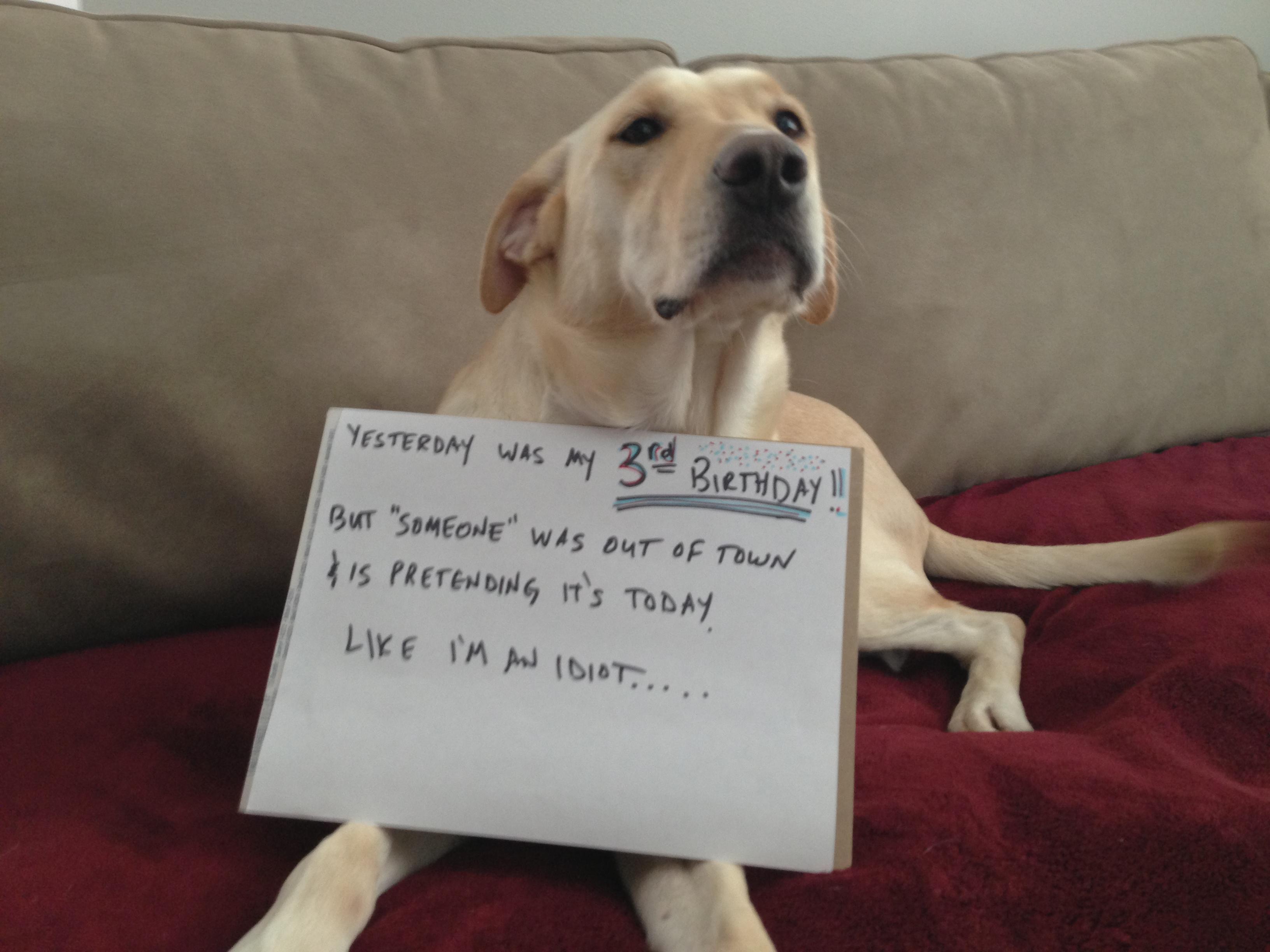 Reverse dog shaming