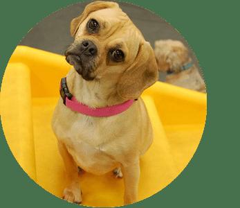 dog care philosophy