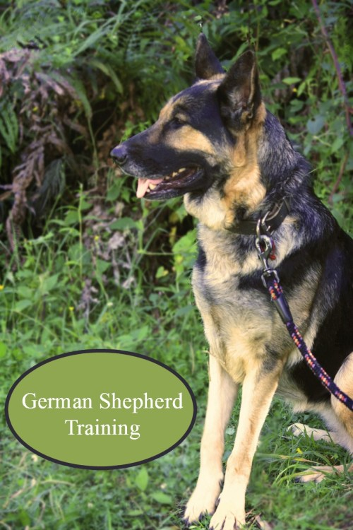 Medium Of How To Train A German Shepherd Puppy